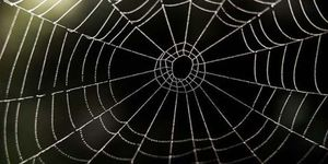 10 Natural Ways To Keep Spiders Out Of Your House