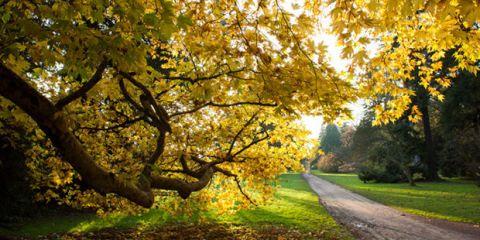 Nature, Branch, Deciduous, Grass, Yellow, Green, Leaf, Natural landscape, Landscape, Twig,