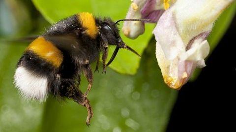Invertebrate, Arthropod, Insect, Yellow, Pollinator, Organism, Pest, Flower, Bee, Petal,