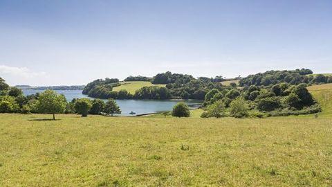 Vegetation, Nature, Natural landscape, Natural environment, Plant, Plain, Landscape, Plant community, Tree, Land lot,