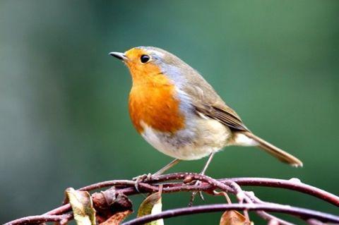 Organism, Daytime, Branch, Yellow, Green, Vertebrate, European robin, Bird, Beak, Twig,