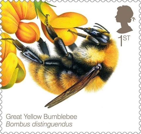 Yellow, Organism, Insect, Pollinator, Petal, Arthropod, Invertebrate, Bee, Membrane-winged insect, Honeybee,