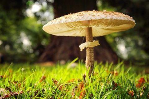 Nature, Vegetation, Natural landscape, Wood, Mushroom, Ingredient, Landscape, Fungus, Leaf, Botany,