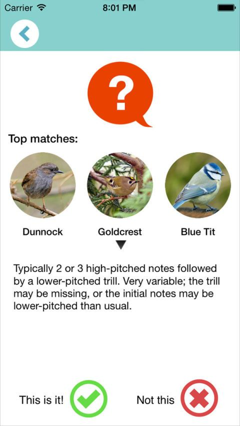 How to identify birdsong - Chirpomatic birdsong app
