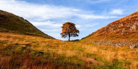 Sycamore gap, Hexham, Northumberland, England