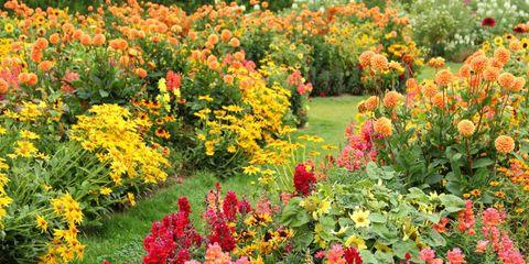 Plant, Flower, Plant community, Garden, Shrub, Groundcover, Wildflower, Annual plant, Botanical garden, Plantation,
