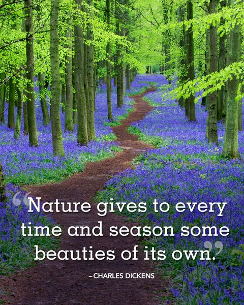 """<p>""""Nature gives to every time and season some beauties of its own.""""  </p>"""
