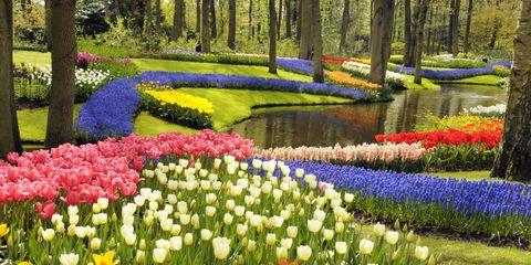 Plant, Flower, Garden, Shrub, Petal, Natural landscape, Botany, Flowering plant, Spring, Groundcover,