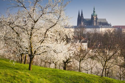 Branch, Tree, Woody plant, Spire, Steeple, Twig, Blossom, Spring, Groundcover, Tower,
