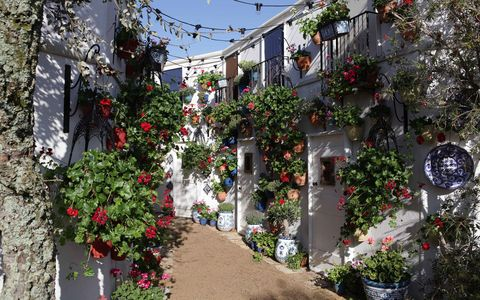 Neighbourhood, Town, Street, Alley, Plant, Tree, Flower, Building, Architecture, Residential area,