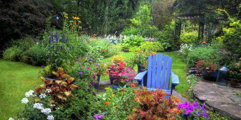 Shrub, Plant, Garden, Flower, Plant community, Petal, Groundcover, Yard, Backyard, Annual plant,