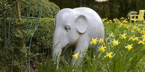 Scratch elephant highgrove