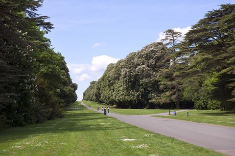 Grass, Garden, Park, Walkway, Shrub, Lawn, Spring, Shade, Landscaping, Botanical garden,