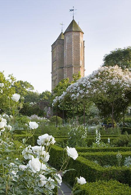 sissinghurst rosa mullicanii covering pergolas