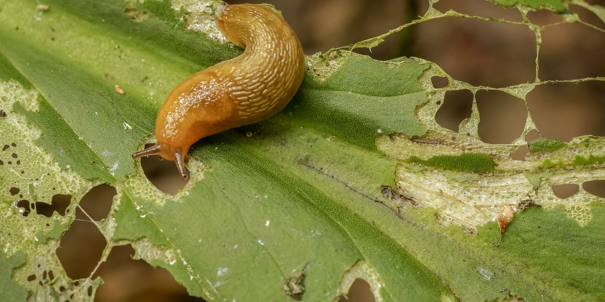 12 simple ways to banish slugs from your garden