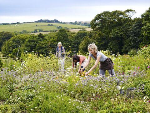How to make a business out of a cut flower garden – Cut Flower Garden Plan