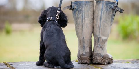 puppy heeling at welly