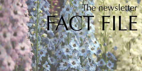 delphiniums fact file