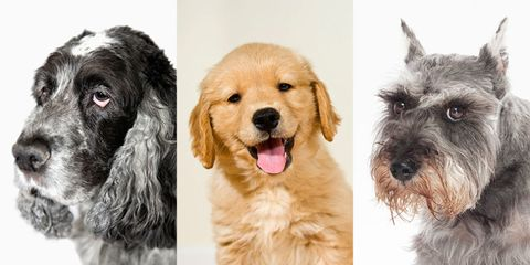 dog emotions