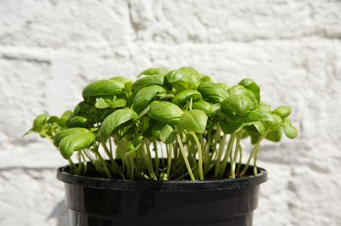 10 of the best herbs to grow in your garden - best herb plants to