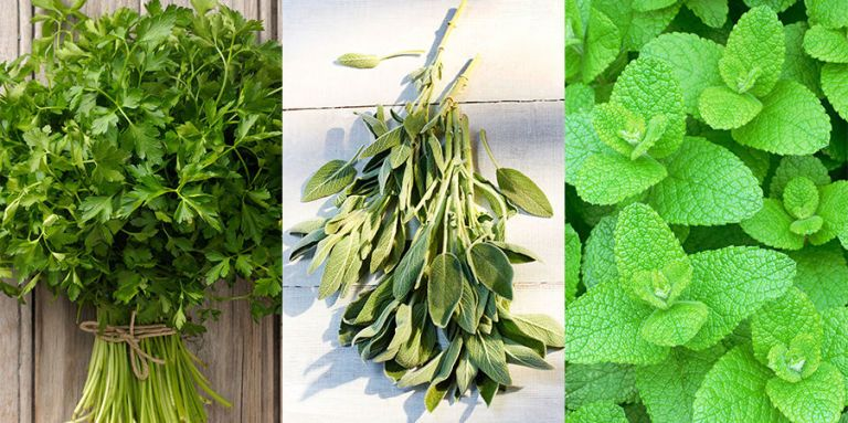 10 of the best herbs to grow in your garden