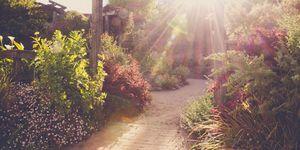 garden heatwave sun