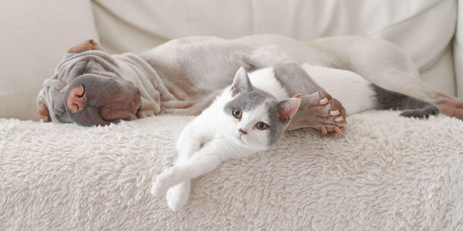 Dog Cat Sofa
