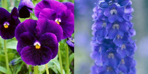 flowers second bloom garden