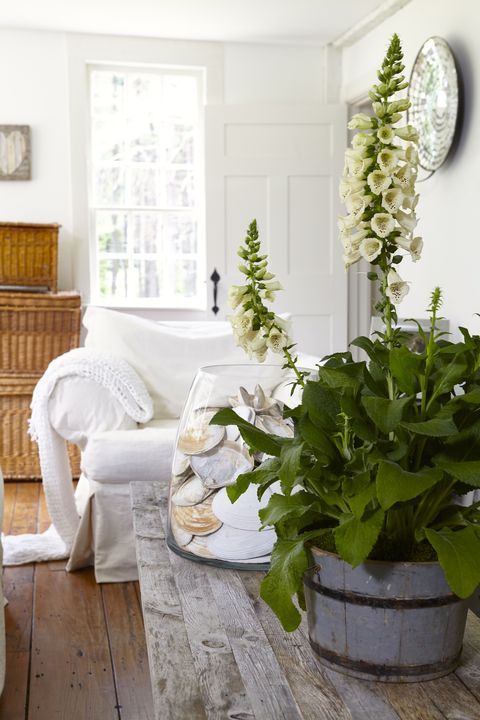 Wood, Room, Interior design, Interior design, Flowerpot, Home, Hardwood, Living room, Houseplant, Home accessories,