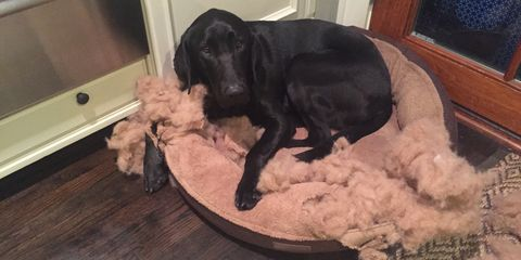 Dog Disaster