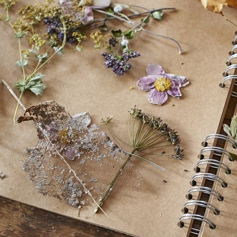Learn The Art Of Flower Pressing How To Press Flowers