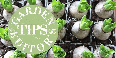 garden tips bulbs