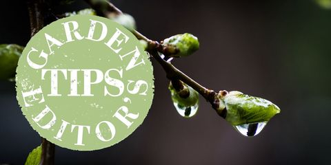 garden tips december