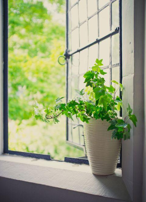Flowerpot, Window, Leaf, Glass, Sunlight, Fixture, Daylighting, Interior design, Tints and shades, Vase,