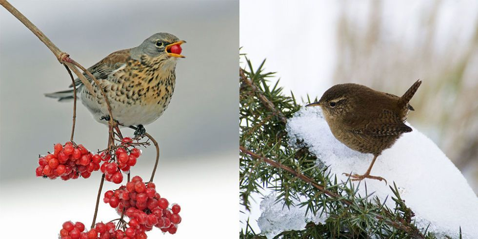 6 Garden Birds To Look Out For In Winter