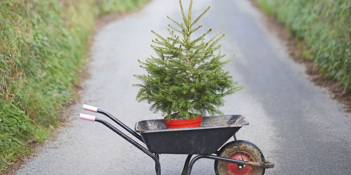 How To Recycle Real And Fake Christmas Trees - Christmas ...