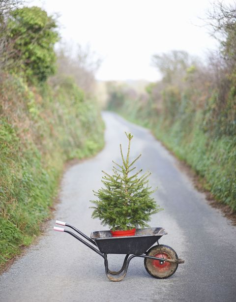 Here's how you can recycle your Christmas tree