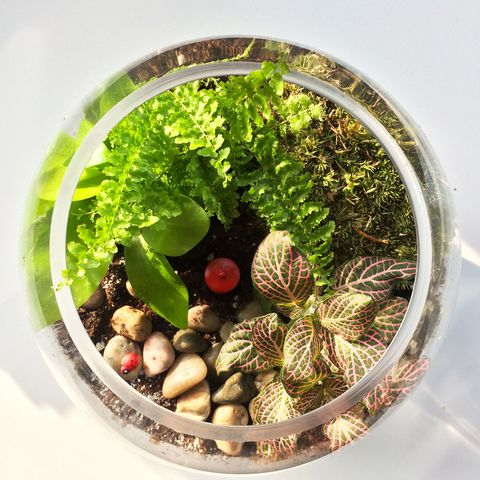 How To Create And Care For A Terrarium Terrarium Care Tips