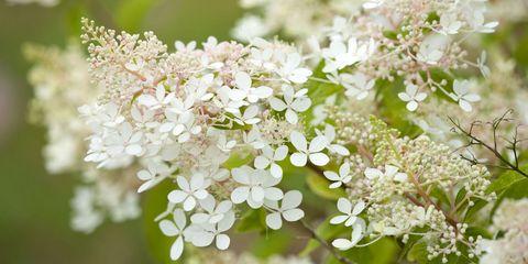 15 of the best shade loving garden plants best shade plants and shade plants hydrangea mightylinksfo