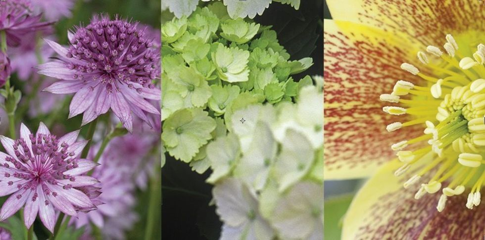 Want To Know The Best Shade Plants For Shady Gardens, Including Shade  Perennials, Full Shade Plants And Colourful Shade Plants? Here, We List 15  Varieties ...