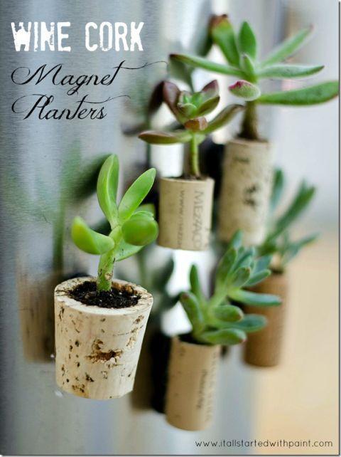 Flower, Flowerpot, Plant, Houseplant, Terrestrial plant, Room, jade flower, Plant stem, Cattleya,
