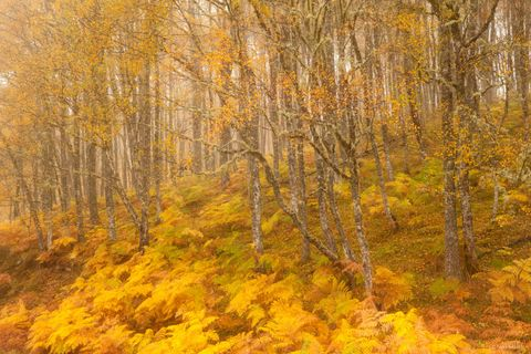 Nick Hanson Scottish Landscape Photographer of the Year  Autumn in Glen Affric