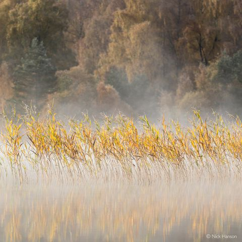 Nick Hanson Scottish Landscape Photographer of the Year Autumn colours On Loch Pityoulish
