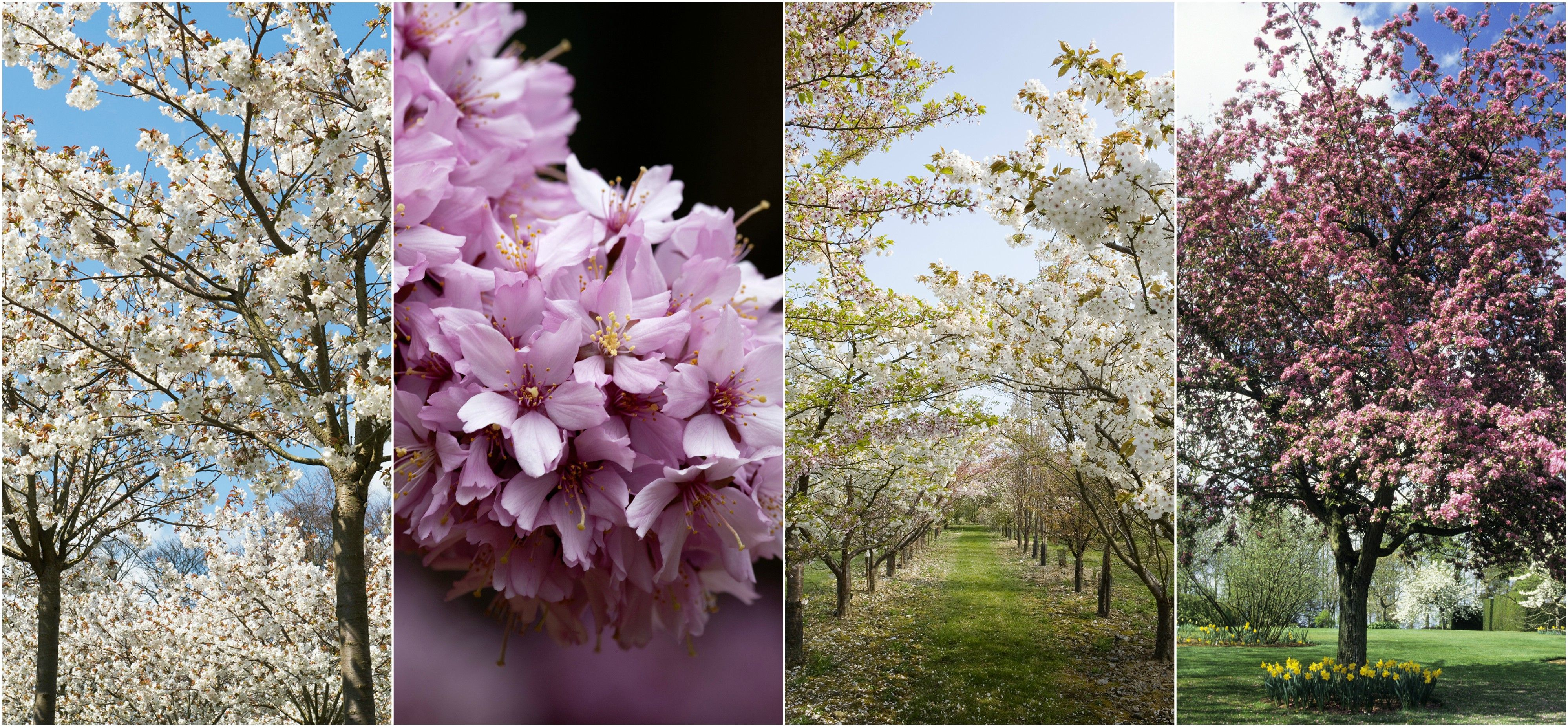 The Best Places To See Blossom In The Uk