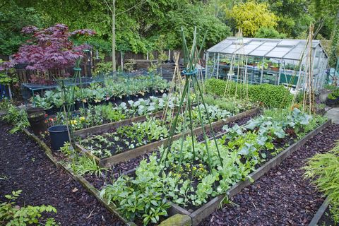 allotment vegetable patch