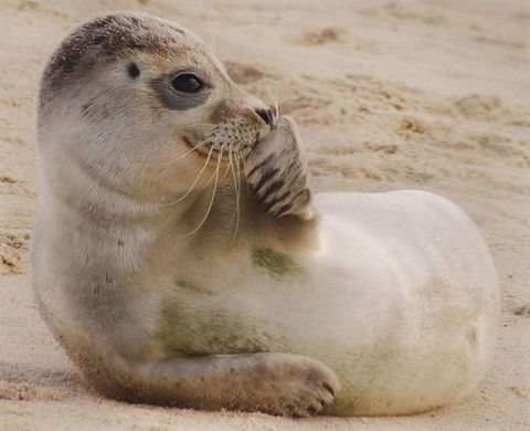 Seal smiling on beach