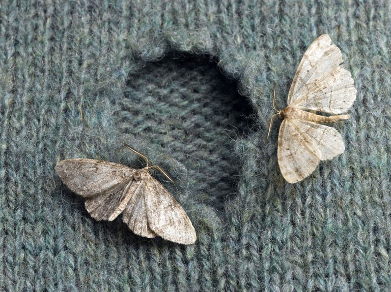 How Do You Get Rid Of Moths In Clothes Closet Image