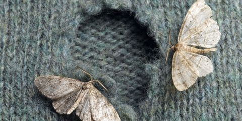 Moth Whole In Clothes