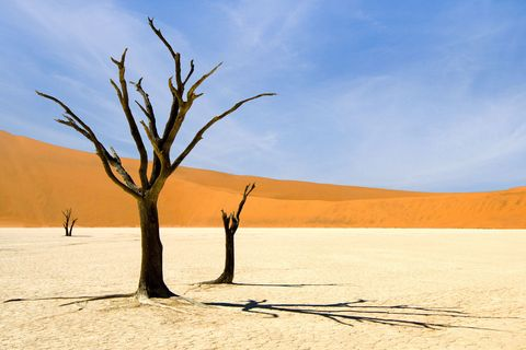 Dry heat and bare tree in desert