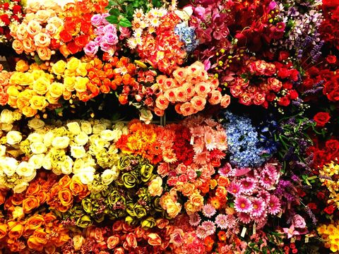 Bright flowers of different colours and types